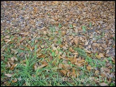 Passeggiando per Padulle - novembre 2013 (38)
