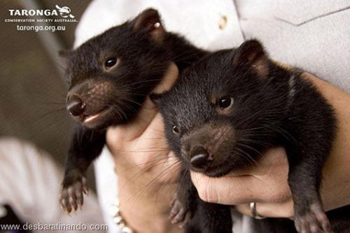 filhotes recem nascidos zoo zoologico desbaratinando animais lindos fofos  (18)