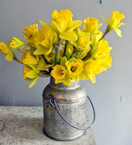 Daffodils 009