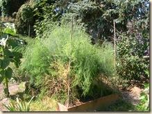 asparagus fern grotto