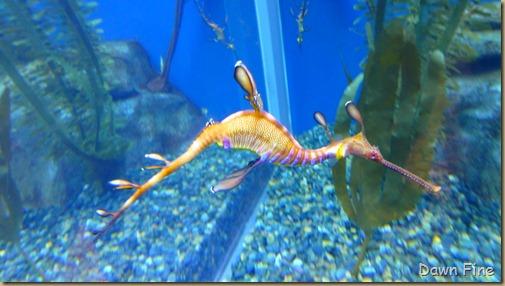 Atlanta Aquarium_122