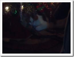 Xmas_December  2012 041