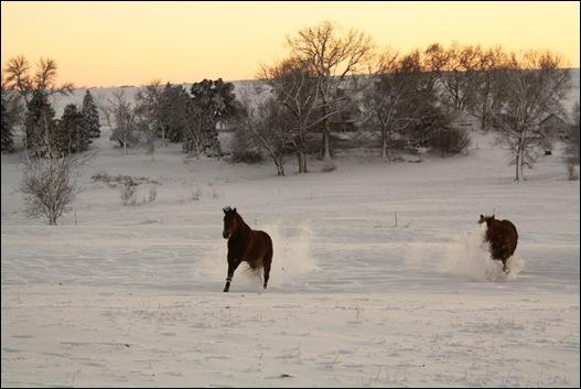 snow horses 025a