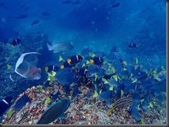 Underwater fish 3
