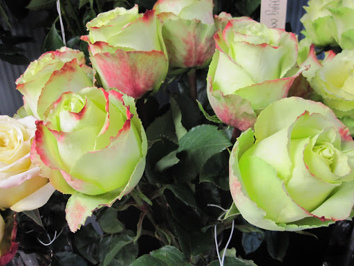 These roses are called