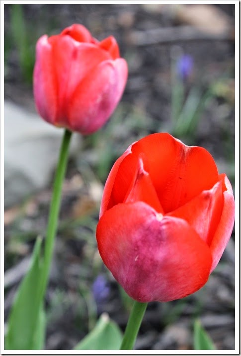 spring 2014 pics 012