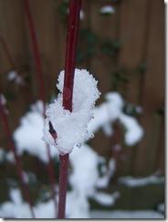 Snowjan2012 037