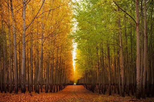 10-manfaat-pohon