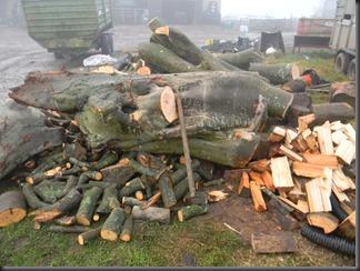 feb 6. 12 logging 004