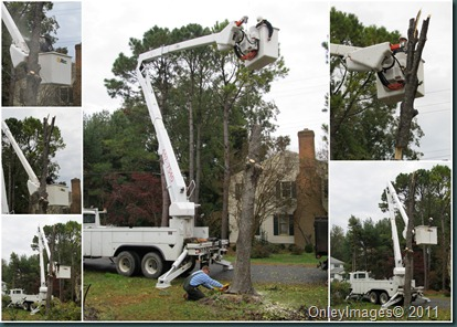 tree removal4
