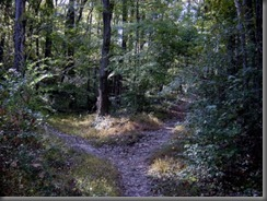 woods_path