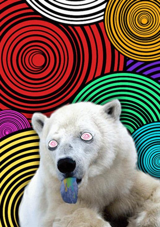 Bear on LSD