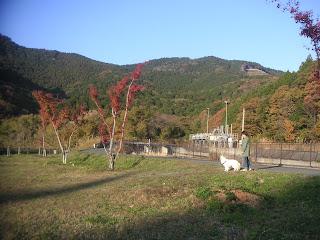 20121125-003.jpg