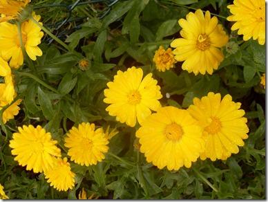 2012_07 Blumen im Garten (7)