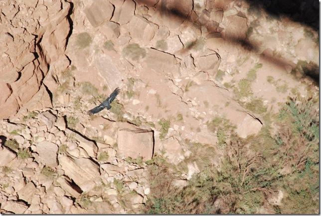 11-02-11 F Navajo Bridge Area (43)