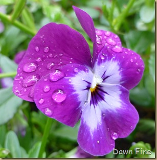 flowersbirds_110