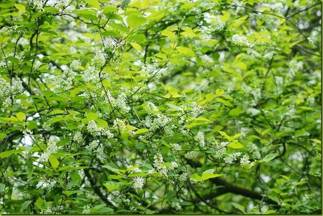 woodland spring blossom