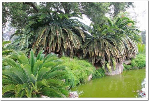 130403_Lotusland_Encephalartos-woodii_01