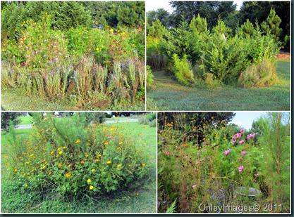 wildflower gdns collage0818
