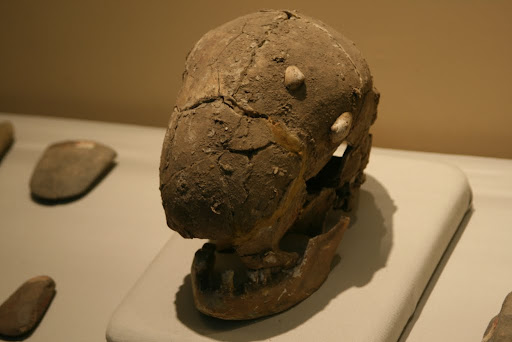 Human Skull, 5-6000 BP apparently. We think it is actually an alien, it has no eyes!!