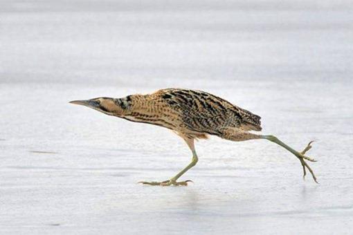 Птичка торопится
