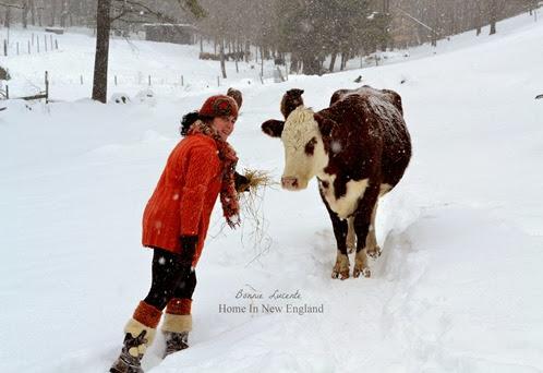 maria  feeding cow