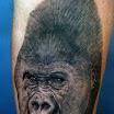 Gorilla #2