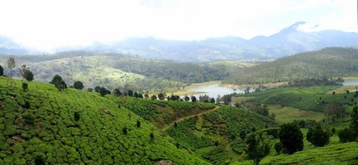 honeymoon in india-munnar