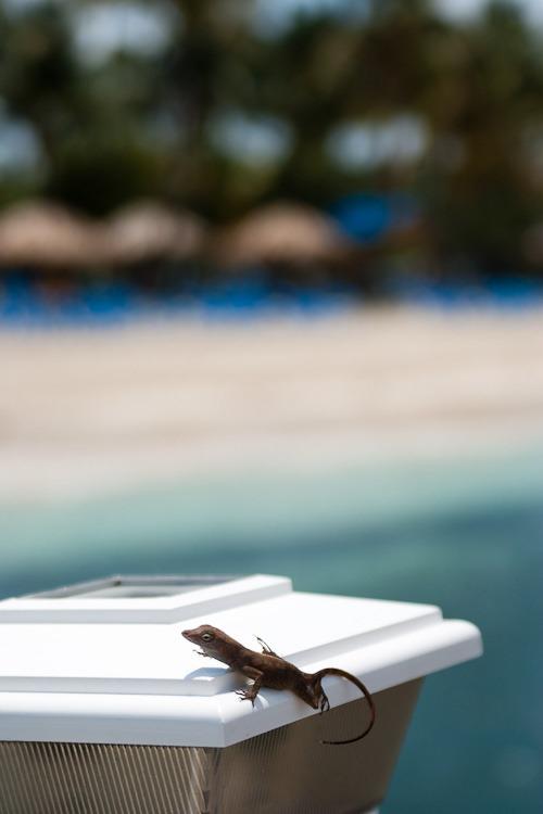 Palomino Island blog-7
