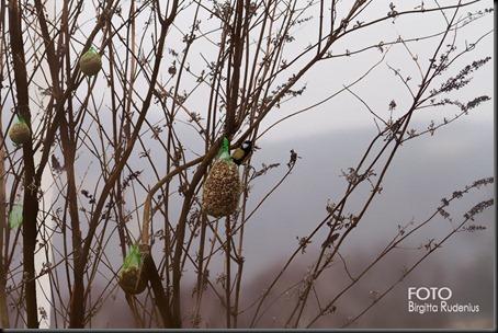 nature_20120320_talgoxe