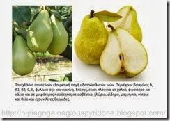 τα φρούτα του φθινοπώρου (8)
