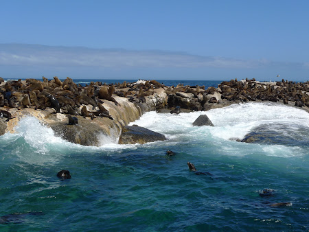 Foci la Cape Town in Africa de Sud