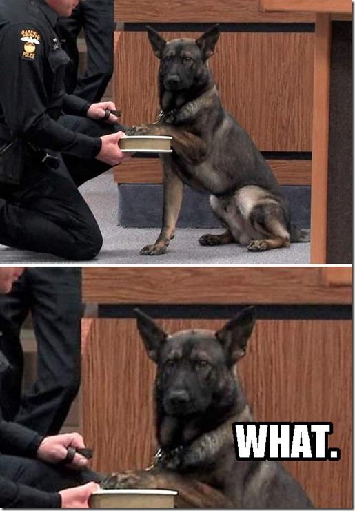 dogs-no-clue-4