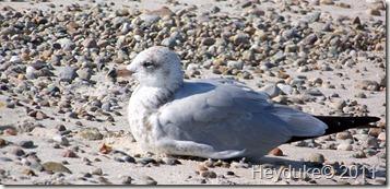 2011-09-13 Cape Cod NP 003