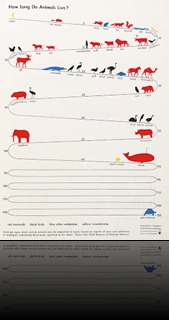 How-Long-Do-Animals-Live