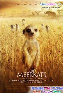 Loài Cầy Vằn Châu Phi - The Meerkats