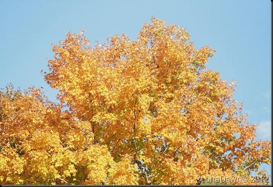 CF_Autumn