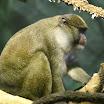 Chicago IL - Lincoln Park Zoo
