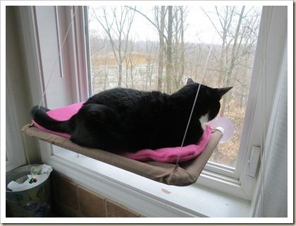 Sunny-Seat-Cat-Cushion (23)