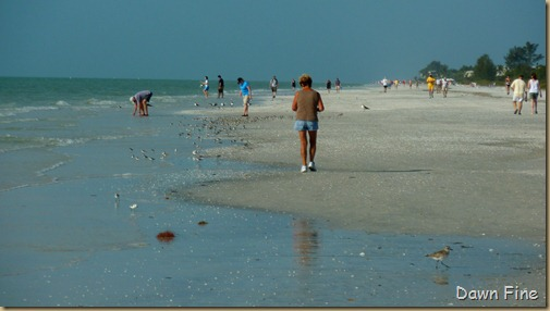 morning sanibel_113