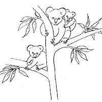 koalas-1.jpg