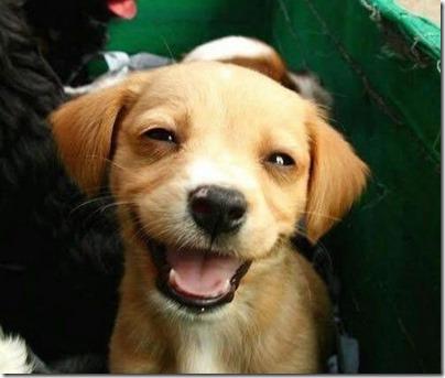 fotos gradiosas de perros capitanpalomo (15)