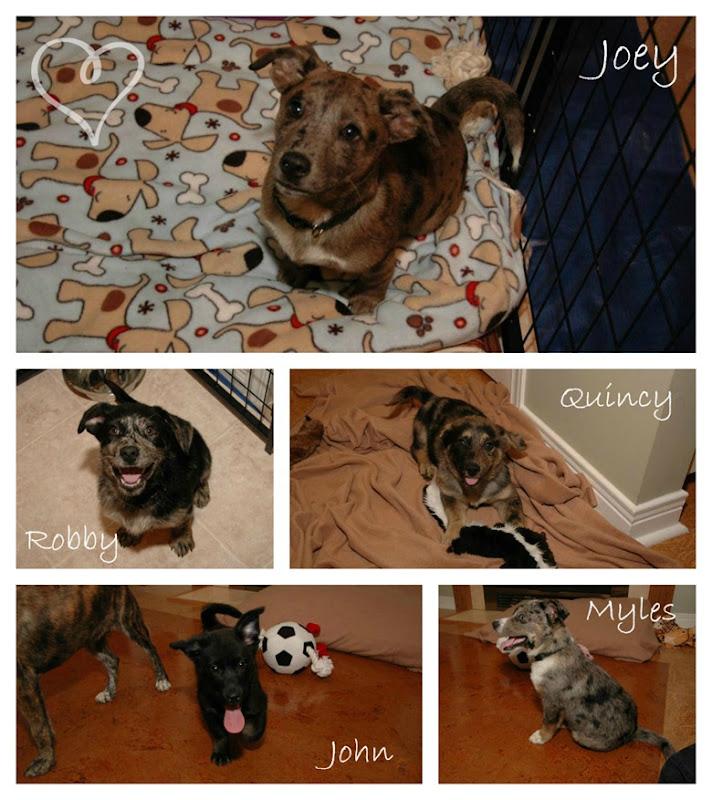 puppy collage 2