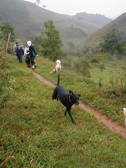 Dogs Trekking 4 (294)