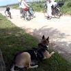 Bandit_Nähe_Radfahrer_1.jpg