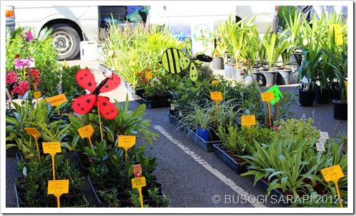 SMALL POTTED PLANTS, ROCKLEA SUNDAY DISCOVERY MARKET© BUSOG! SARAP! 2012