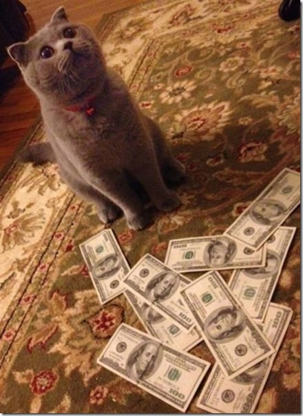 rich-wealthy-cats-21