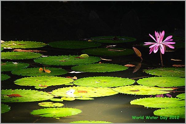 槟城2012世界水源日8