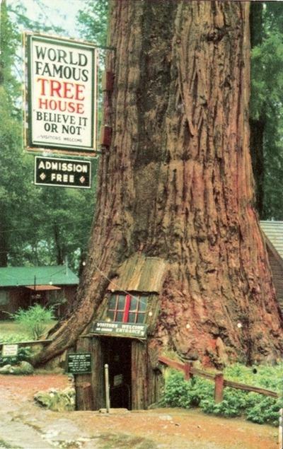 casa em árvore