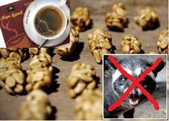 Kopi Luwak - Civet Coffe - tanpa Luwak